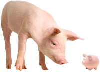 pig and piggy bank